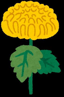 flower_kiku
